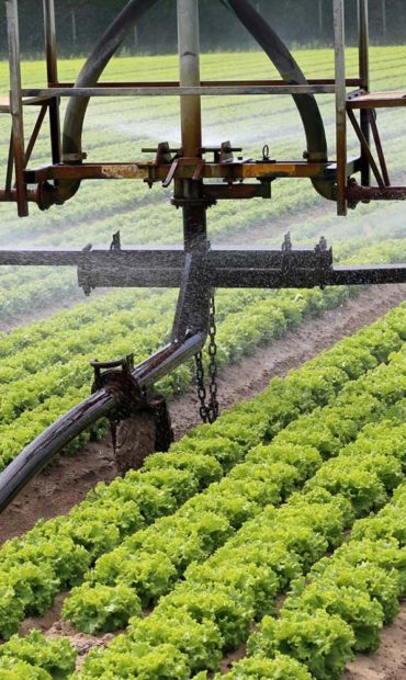 banner-agricultura